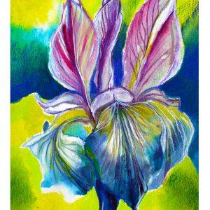 """""""Iris du jour"""" 2020 9.5"""" x 12.5"""" Encre aquarelle sur papier Arches, grain torchon, 90 lbs à faire encadrer"""